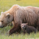 2013 Alaska Bear Photo Tour