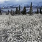 Snowy Denali