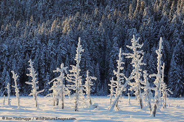 Frozen Ghost Trees