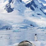 Leopard Seal Surprise!
