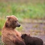 2014 Alaska Photo Tours