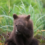 August Bear Tour – 1 spot now open due to cancellation
