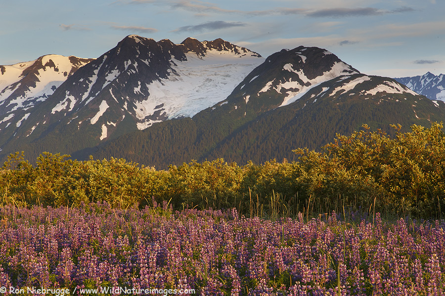 Portage Valley, Chugach National Forest, Alaska.