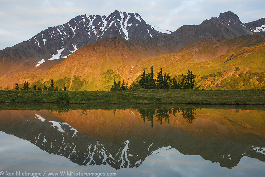 Reflections on a pond, Chugach National Forest, near Seward, Alaska.