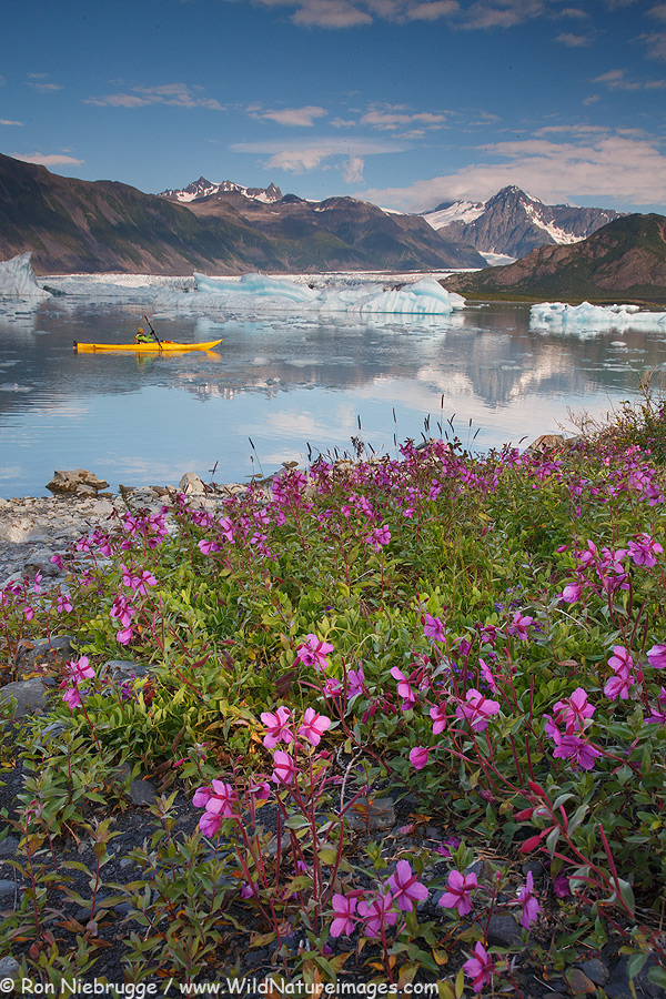 Kayaking last Saturday at Bear Glacier, Kenai Fjords National Park, Alaska.