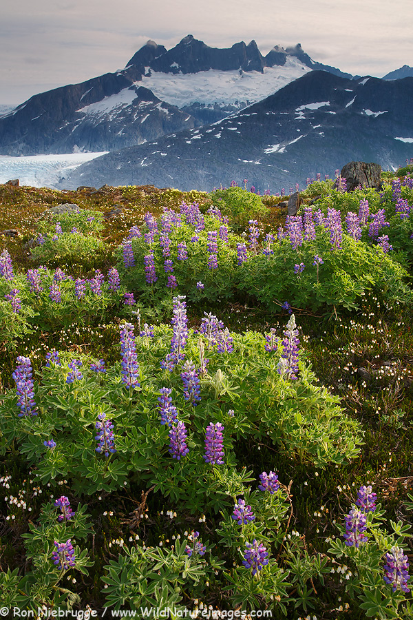 Mount Wrather, Tongass National Forest, near Juneau, Alaska.