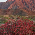 Anza-Borrego Photography Workshop