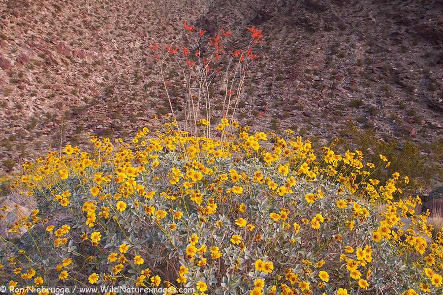 Borrego Palm Canyon, Anza-Borrego Desert State Park, California.