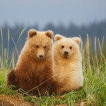 Adorable Bear Cubs