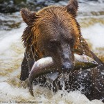 2016 Alaska Whale and Bear Photo Tour