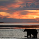 Sunrise Bear