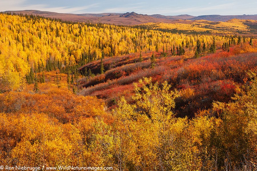 http://www.my-photo-blog.com/wp-content/uploads/2015/09/Arctic-Autumn.jpg