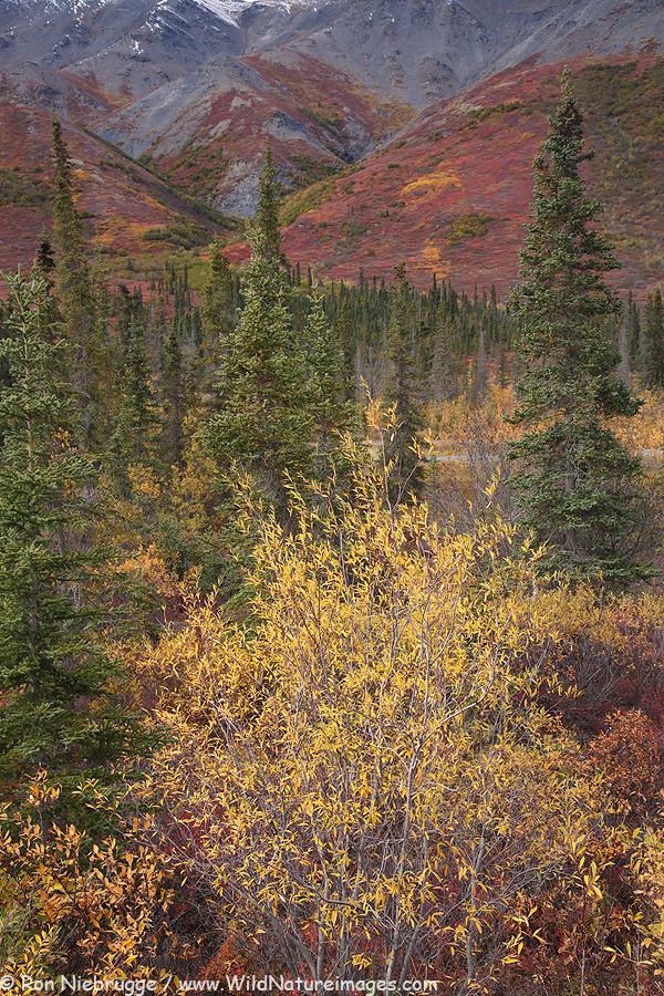 Autumn in the Brooks Range, Alaska.