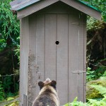 Outhouse Surprise