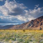Desert Wildflower Outlook – 2016