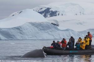 Zodiac cruising, Antarctica.