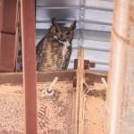 Owl Storage?