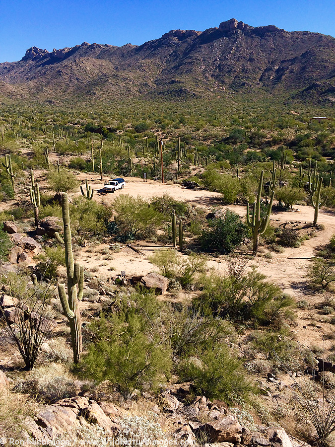Our new land in the Tortolita Mountains, North of Tucson, Arizona.