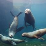 Greeting from the gang at the Alaska Sealife Center!