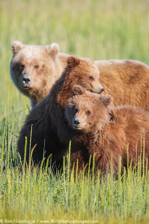 second-summer-bear-cubs