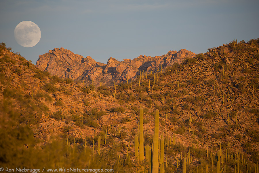 Near full moon rising above the Torolital Mountains, Arizona.