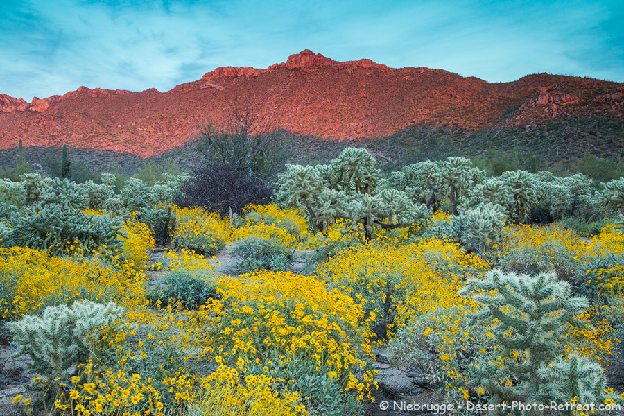 Wildfowers in the Tortolita Mountains near Tucson, Arizona.