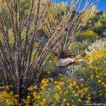 Tortalita Wildflowers