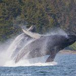 Glacier Bay National Park Photo Tour