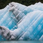 Tongass Iceberg