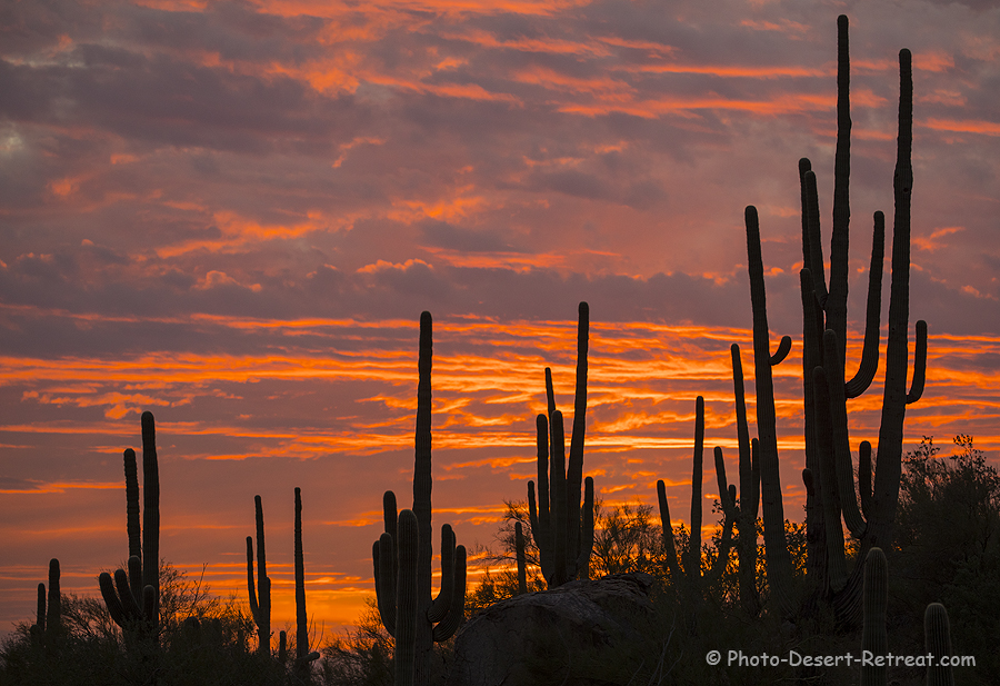 Recent sunset. To give you an idea of what the property is like - not only am I on the property, but so are these beautiful saguaros. Our even blind is just beyond the saguaros.