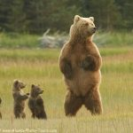 Alaska Bear Photo Tour Opening!