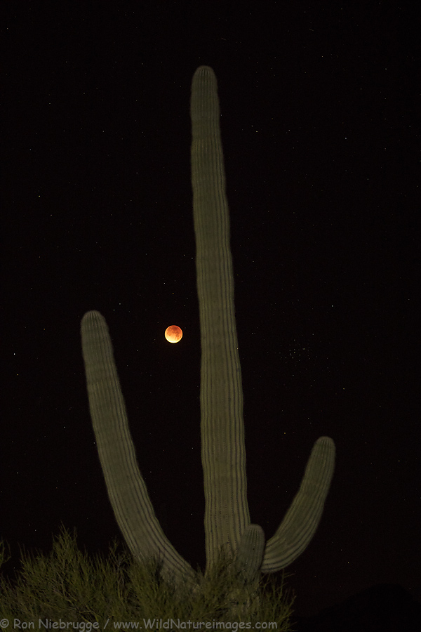 Lunar eclipse, near Tucson, Arizona.