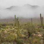 Desert Rain!