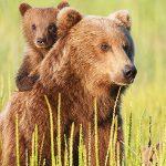 Bear Trip Opening!