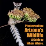 Photographing Arizona's Wildlife  A Guide to When, Where and How