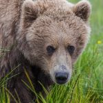 Bear Time!