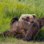 Brown Bear Fun!
