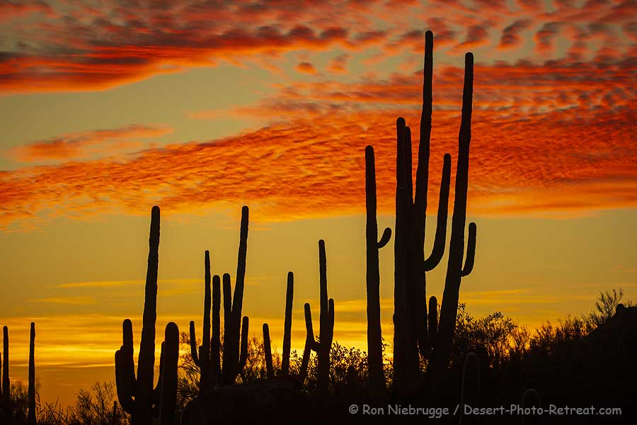 Sunset last night at the Desert Photo Retreat, Tucson, Arizona.