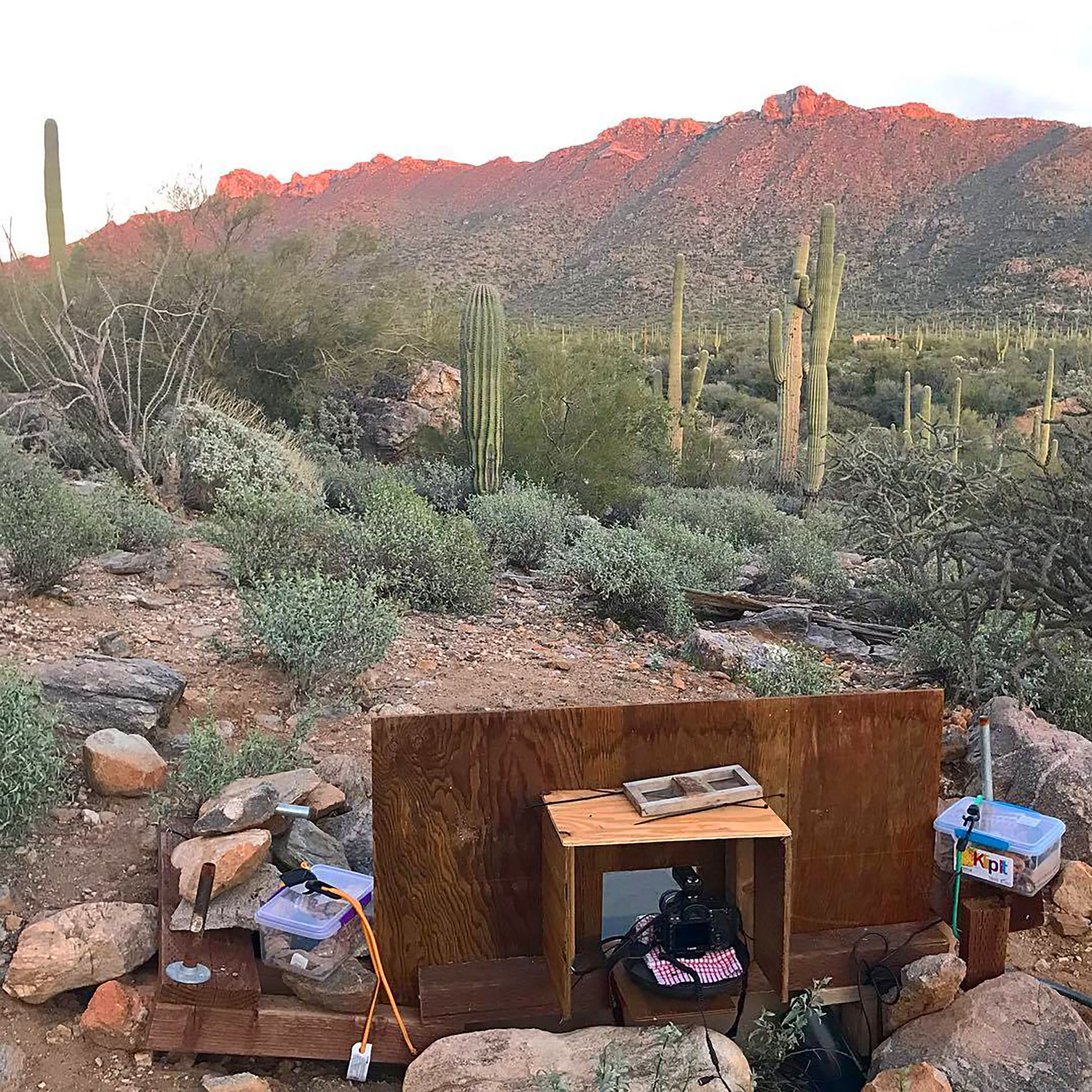 Camera trap setup, Desert Photo Retreat, near Tucson, Arizona.