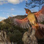 Camera Trap Cardinal