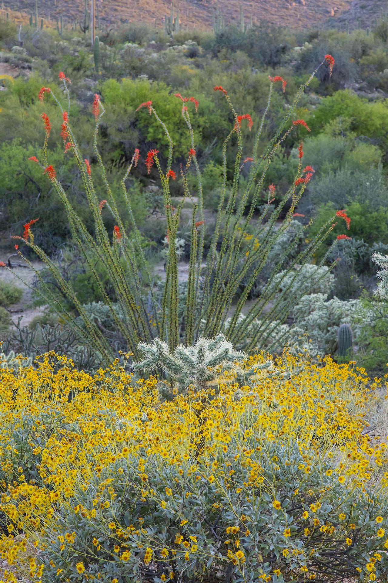 Wildflowers at the Desert Photo Retreat near Tucson, Arizona.