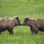 Alaska Photo Tours for 2020