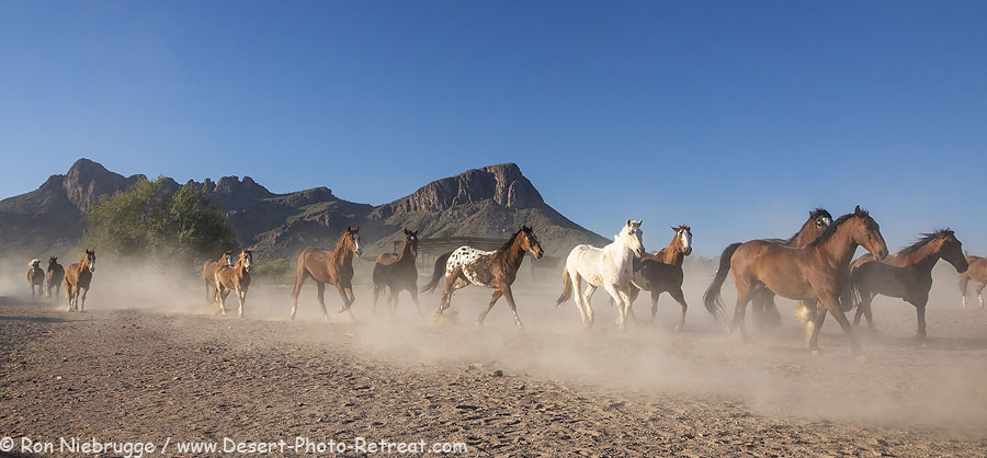 Morning horse roundup, White Stallion Ranch, Tucson, Arizona.