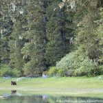 Rain Forest Bears