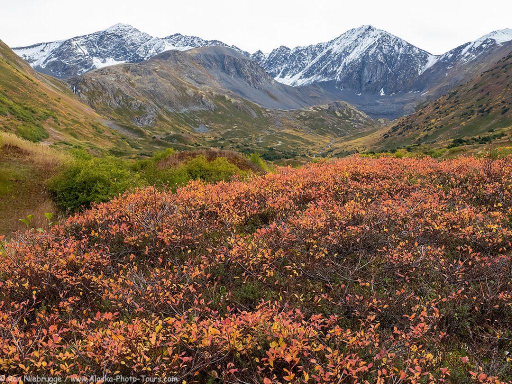 Hills above Hope, Alaska.