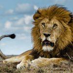 Africa Safari!