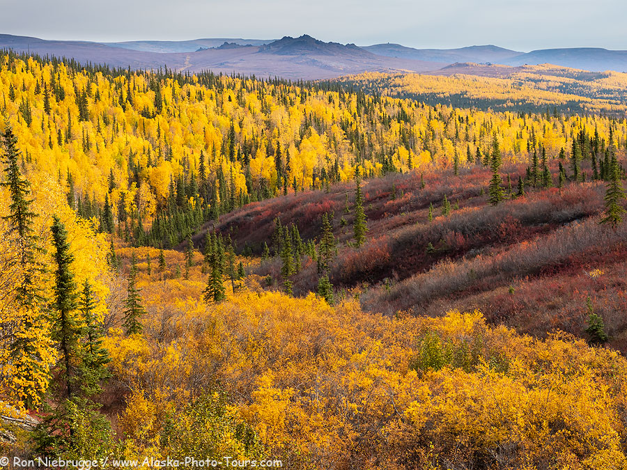 Autumn along the Dalton Highway, Alaska.