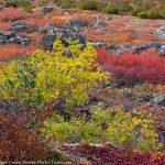 Dalton Highway Color
