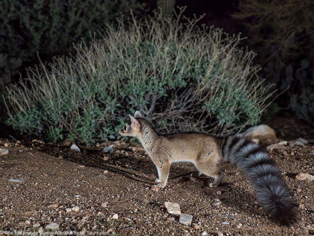 Ringtail Desert Photo Retreat, near Tucson, Arizona.