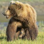 Peak a boo cub